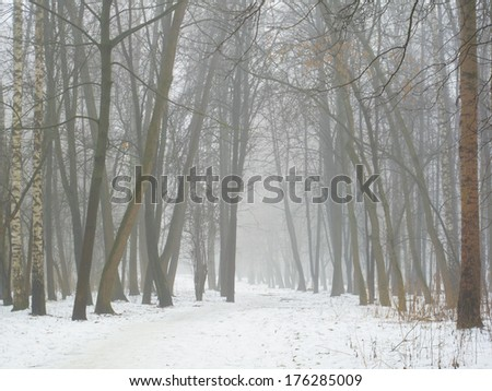 February grove in fog and melting snow