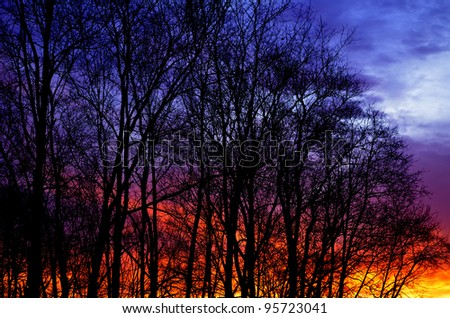 February sunrise through Cherry trees, Webster County, West Virginia, USA - stock photo