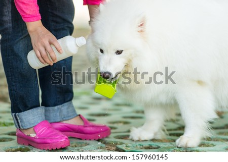 feed a dog - stock photo