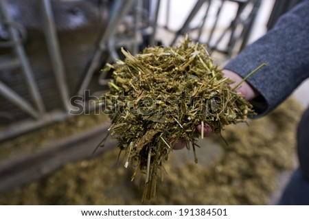 feed for cows on the dairy farm - stock photo