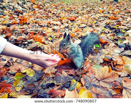 stock-photo-feeding-a-grey-squirrel-with
