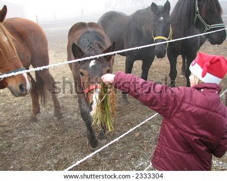 Feeding a Horse - stock photo