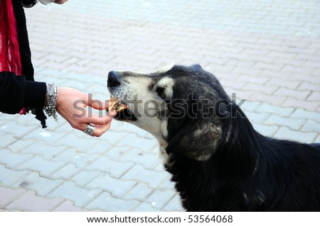 feeding an abandoned, street dog - stock photo