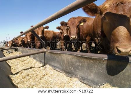 Feeding bunks on a farm in Saskatchewan - stock photo