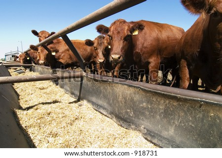 Feeding bunks on a farm in Saskatchewan - stock photo