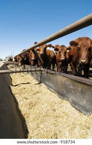 Feeding bunks on a farm in Saskatchewan