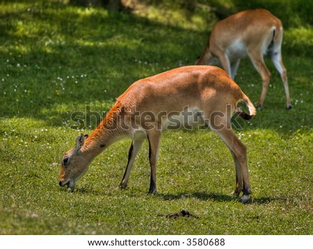 Feeding Deer - stock photo