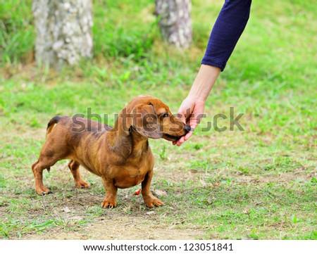 feeding dog - stock photo