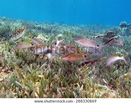 Frenzy stock photos images pictures shutterstock for Feeding frenzy fish