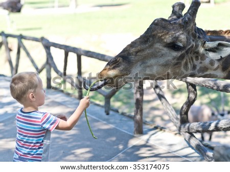 feeding giraffe in the Zoo - stock photo