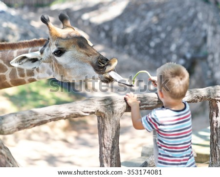 feeding giraffe in the Zoo, focus on giraffe - stock photo