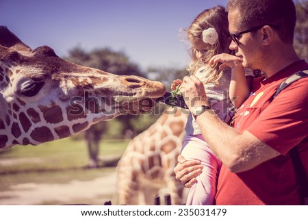 Feeding giraffes - stock photo