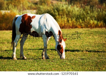 Feeding horse - stock photo