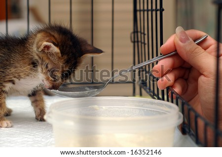 Feeding Kitten - stock photo