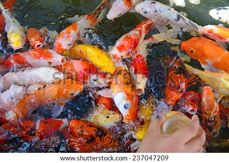 Stock images royalty free images vectors shutterstock for Koi fish in kiddie pool