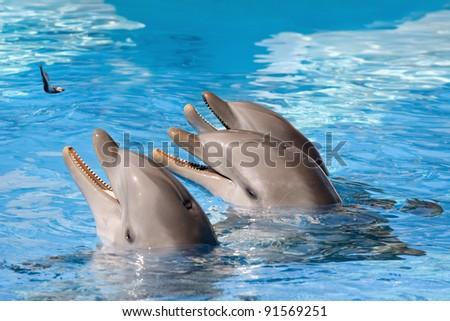 Feeding of dolphins in aquarium - stock photo