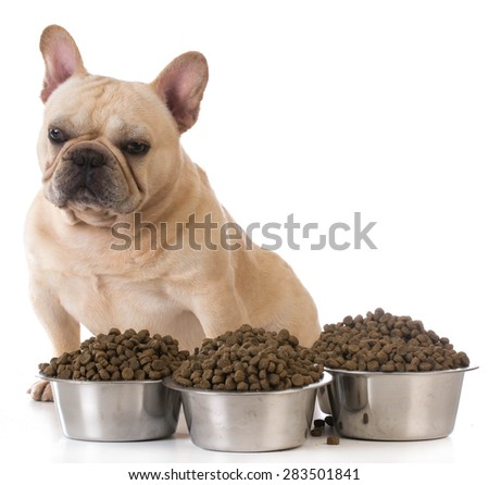 feeding the dog - french bulldog sitting beside several bowls of dog food on white background - stock photo