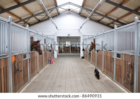 Feeding time for brown and white horse in stable - stock photo