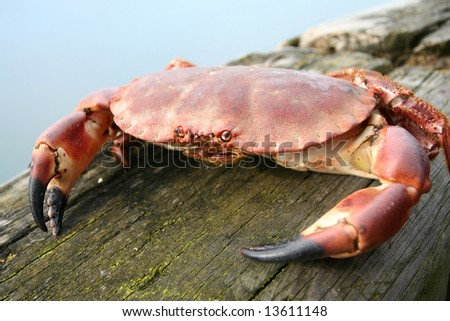 Feeling the Pinch, fresh Crab on the Dock of the Bay at Craster England famous for it's Crabs and smoked Kippers - stock photo