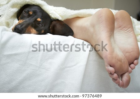 Feet and a sleeping Dachshund on white linen - stock photo