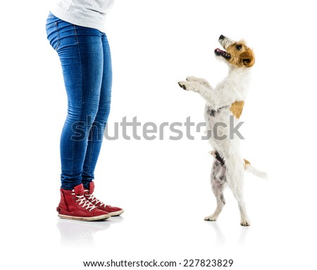 Feet and dog isolated on white background in studio