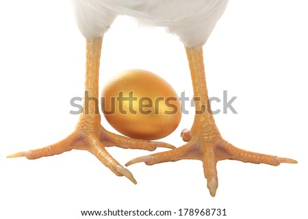 feet hen with gold eggs - stock photo