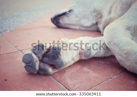 Feet of dog