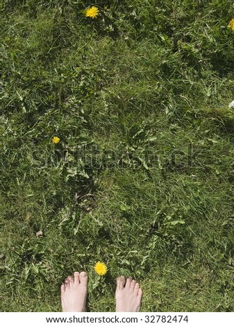 Feet peeking out on grass with dandelions, shot portrait - stock photo