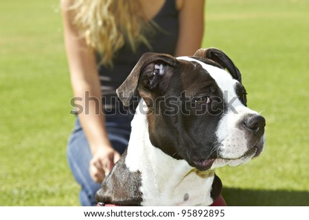 Feisty young Pit Bull dog breed