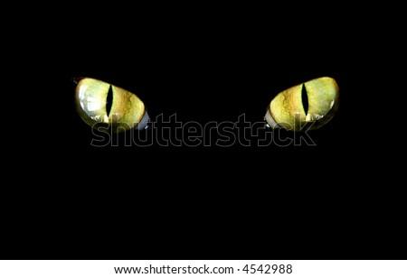 feline eye in the dark - stock photo