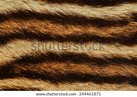 feline fur pattern - stock photo