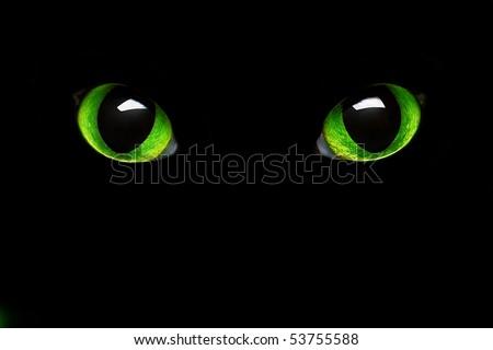feline green eye in the dark - stock photo