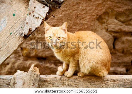 feline in morocco africa and sweet face - stock photo