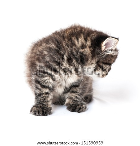 Feline kitten on a white background