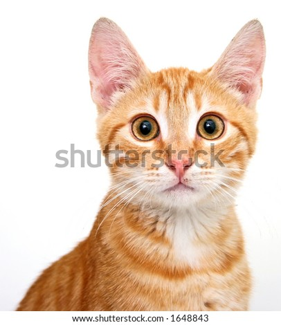 feline portrait - stock photo