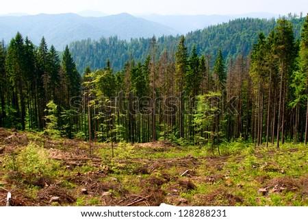 Felled area in Carpathian mountains, Ukraine - stock photo