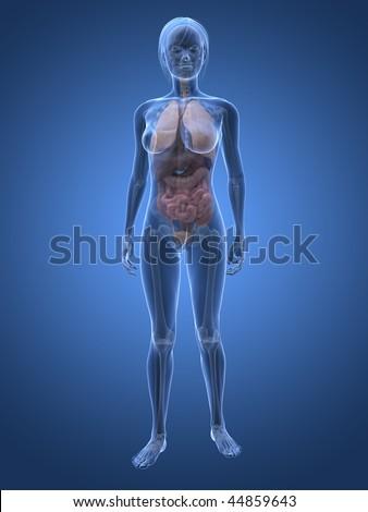 Photo of female anatomy