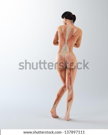 Female anatomy - health and science illustration - stock photo