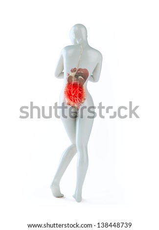 Female anatomy - health and science illustration - digestive system - stock photo