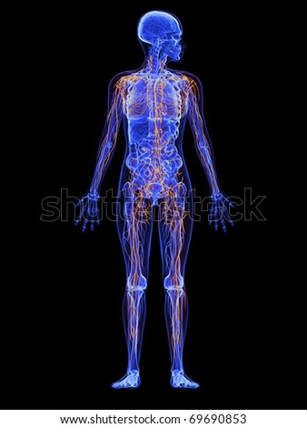 female anatomy - lymphatic system - stock photo