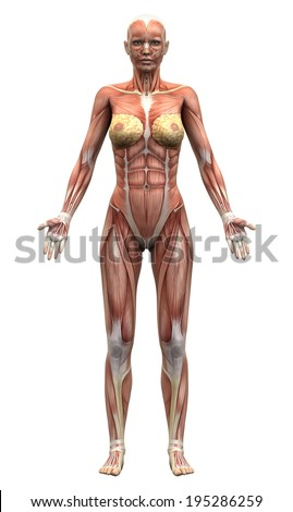 female anatomy stock images, royalty-free images & vectors, Human Body