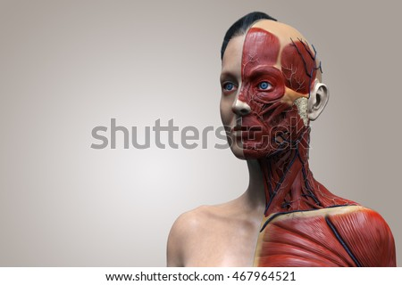 female anatomy of the head neck and chest , medical background of human anatomy  in 3d realistic render isolated