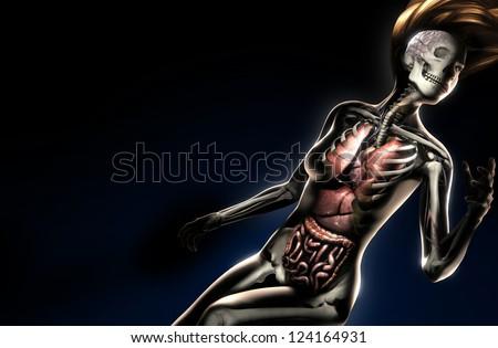 female anatomy on black - stock photo