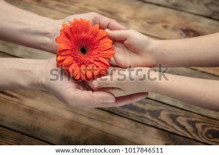 Female and children's hands hold a big orange flower. Concept Mother's Day. Wooden background