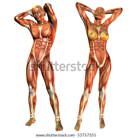 female and male muscle course in a standing pose - stock photo