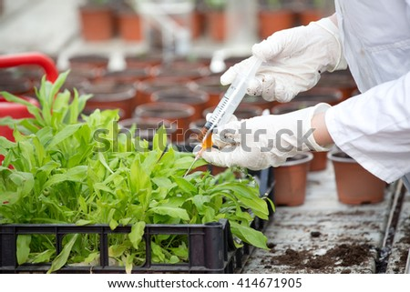 Female biologist pouring chemistry from syringe into sprouts in crate - stock photo