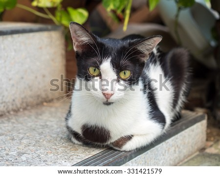 Female black and white adult cat lay on outdoor corridor, selective focus on its eye