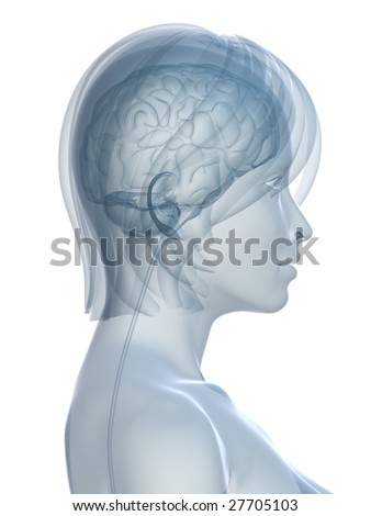 female brain - stock photo