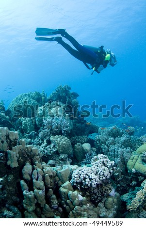 Female diver hovering over a beautiful coral reef in the Red Sea, Egypt - stock photo