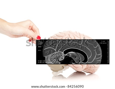 Female doctor holding an x-ray of the brain in front of a human brain model isolated on white background - stock photo